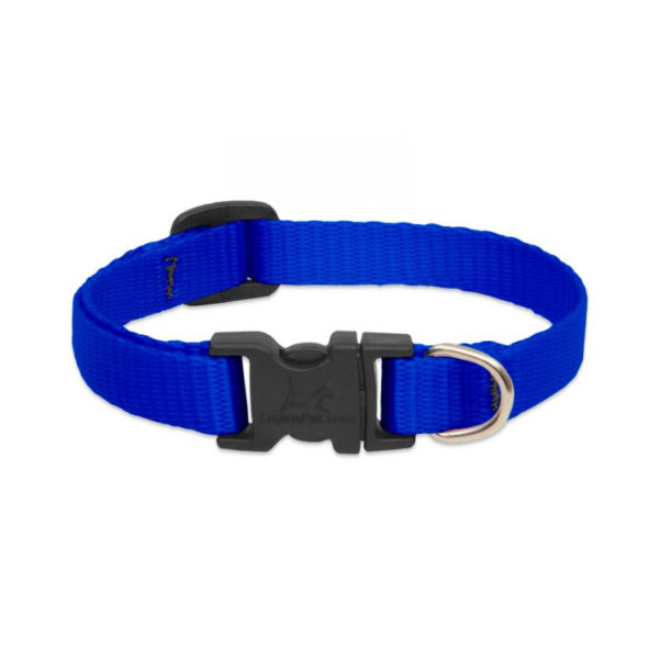 "Lupine Blue Small Dog Collar 8-12"""